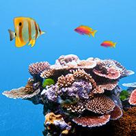 underwater-ocean-3d-prezi-template