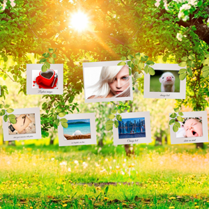 Photo Gallery on a Sunny Afternoon - Prezi Template